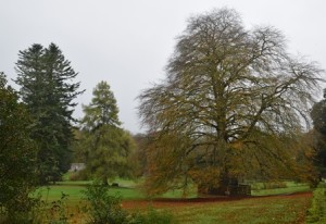 The Autograph Tree at Coole Park