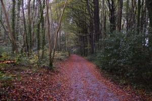 20 Coole Path