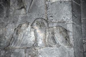 48 Owl