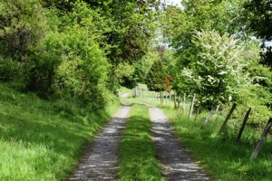 The drive leading up to Woodbrook House